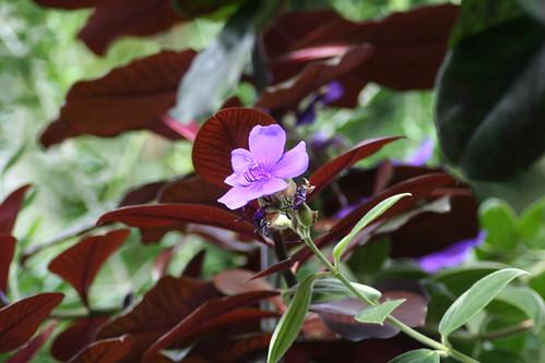 20090919 Edinburgh 20 Royal Botanic Garden 082