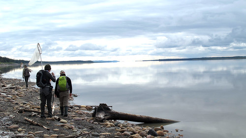Collecting along the shoreline in Norman Wells, NWT