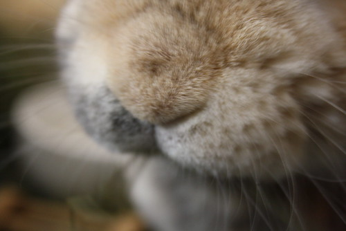 bunny nose! - 11.06.2011