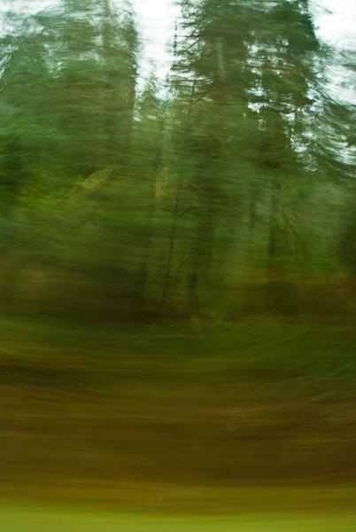 Quinault rainforest dreams