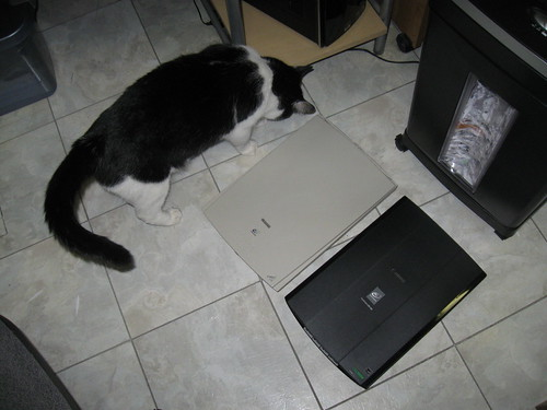 Old scanner, new scanner, cat scanner
