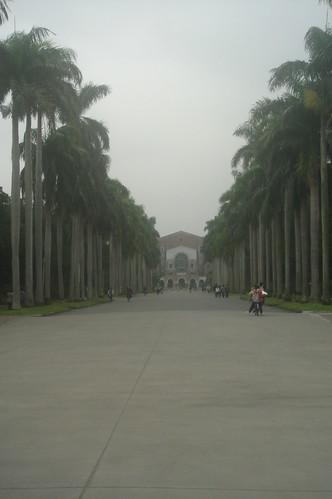 椰林大道_面向圖書館