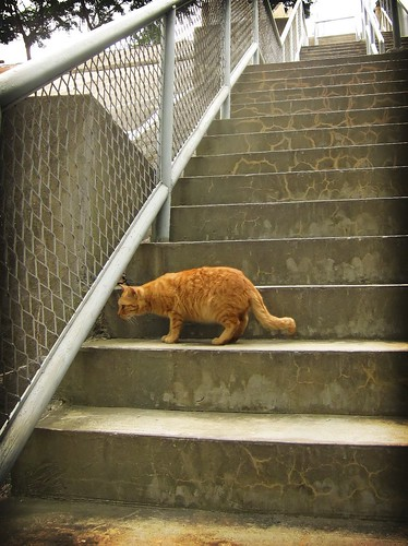 The Cat on the Stairs