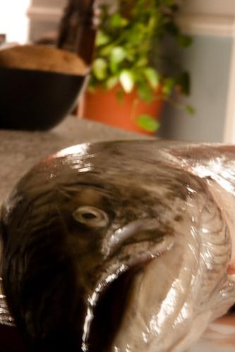 365-71 Salmon
