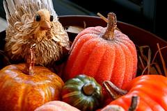 turkey in the gourds