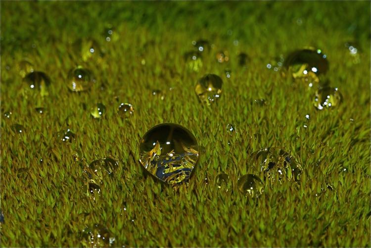 Water drop on winter moss