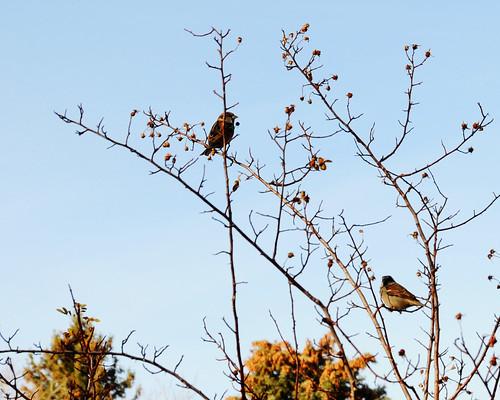 Birds -- 30 Days of Gratitude