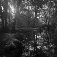 The river's mirror - deja vu