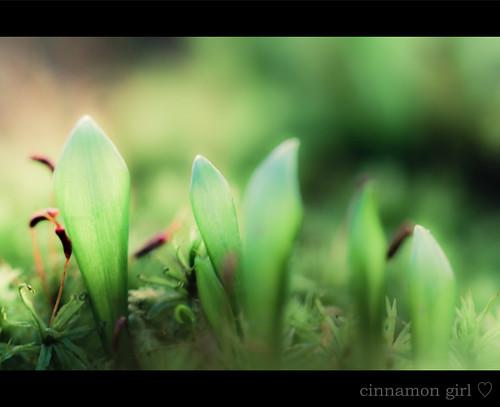Gorgeous Green Thursday e explored e