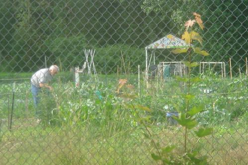 社區農園2