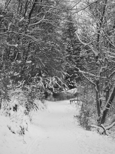 snow5_blog