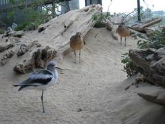 3885_Birds