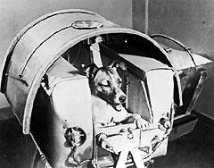 Spoutnik 2 Laïka