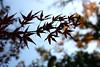 Photo:Mukojima Hyakkaen Autumn Leaves - 03 By