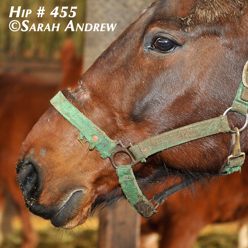 All horses found homes!