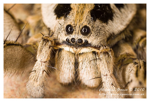 "Araña • <a style=""font-size:0.8em;"" href=""http://www.flickr.com/photos/20681585@N05/4518331664/"" target=""_blank"">View on Flickr</a>"