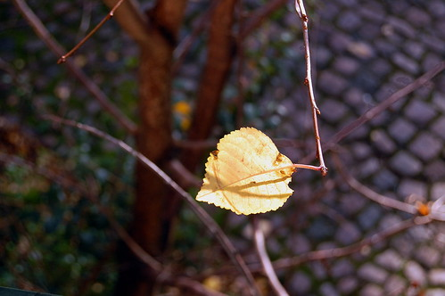 Lone Lime Leaf