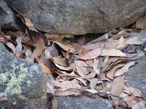 2008_0106australia20076