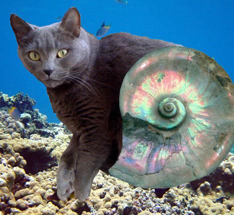 lola_ammonite