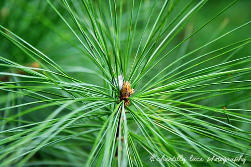 93/365: Pine