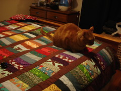 Quilt, now with added cat