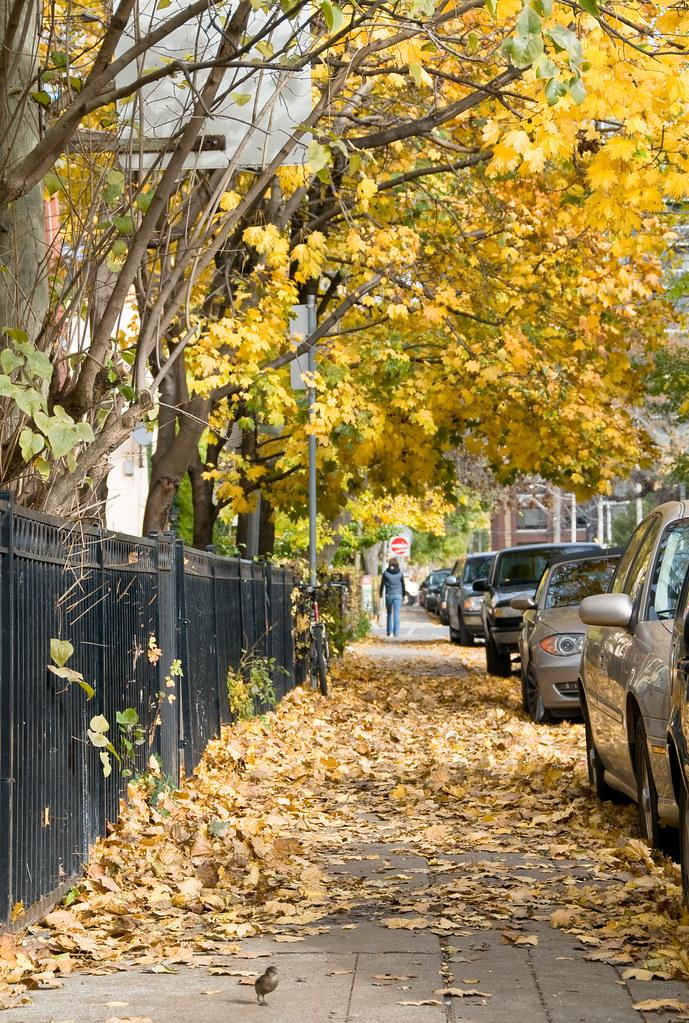 Walking on a sidewalk full of leaves