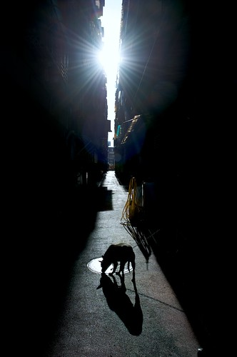 Taipei, Taiwan - Dog in Alley