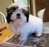 paper puppy