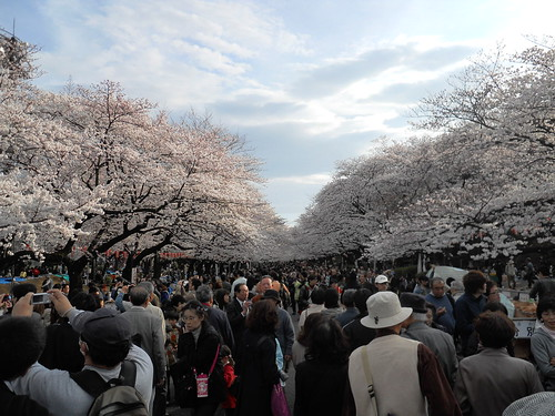 Ueno park in bloom