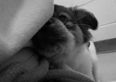 Skylar snuggles