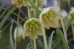 峯市民の森の花(Flower at Mine civic forest, Japan