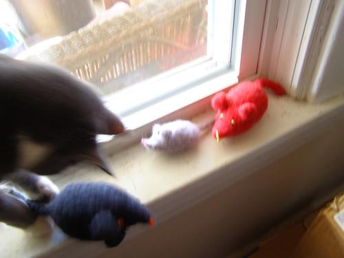 mice stolen