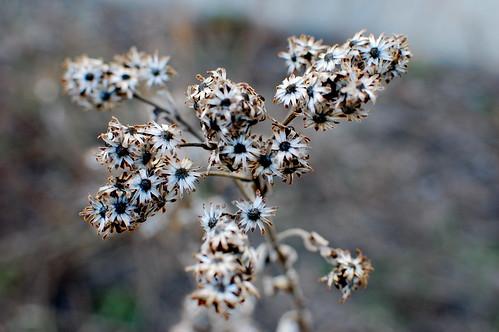 080a.365 flower shells