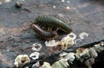 Marine Beetles