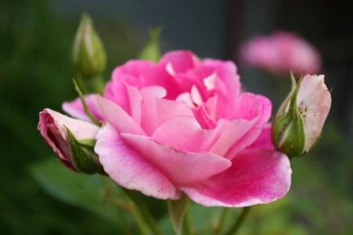Flower Pr0n