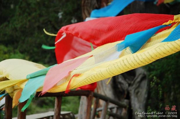 西藏林芝世界柏樹王園林12.jpg