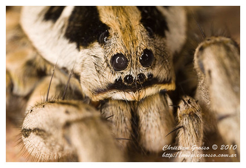 "Araña • <a style=""font-size:0.8em;"" href=""http://www.flickr.com/photos/20681585@N05/4517683055/"" target=""_blank"">View on Flickr</a>"