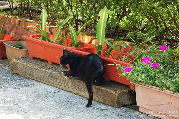 [侯硐]Cat。貓鎮中的一紳士貓04.jpg