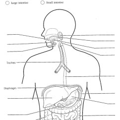 Respiratory System Blank Diagram To Label Zachman Framework Empty Digestive Great Installation Of Wiring Unit 9 Rh Educatorpages Com Pdf Fetal Pig