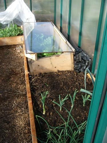 Greenhouse view