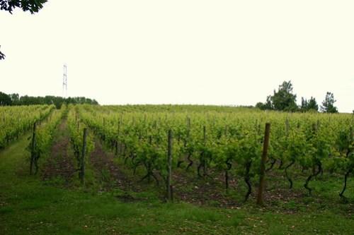 Leventhorpe Vineyard