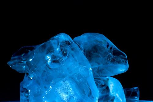 Blue Ice. - 42/365