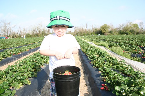 Look at my strawberries!