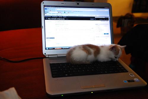 Arroyo, the 110 kitten