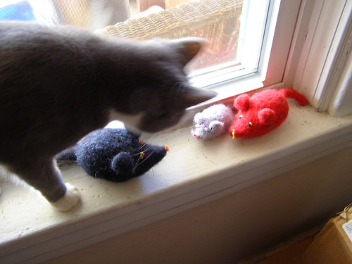 mice and cat