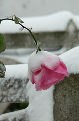 Çanakkale / Ezine / Tavaklı'dan kış manzaraları #5