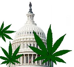 Medical Marijuana Passes in DC