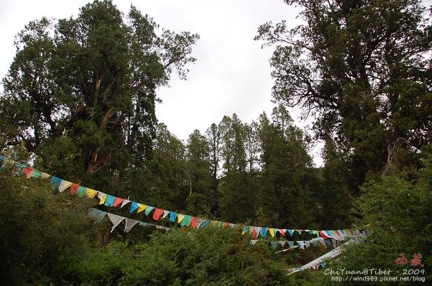 西藏林芝世界柏樹王園林03.jpg