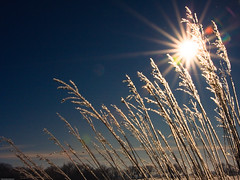 Prairie Grass & Sun