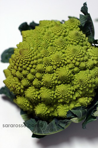 Broccolo Cavolo Romanesco, Roman Cauliflower